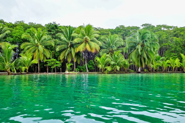 Tropical Forest of Panama