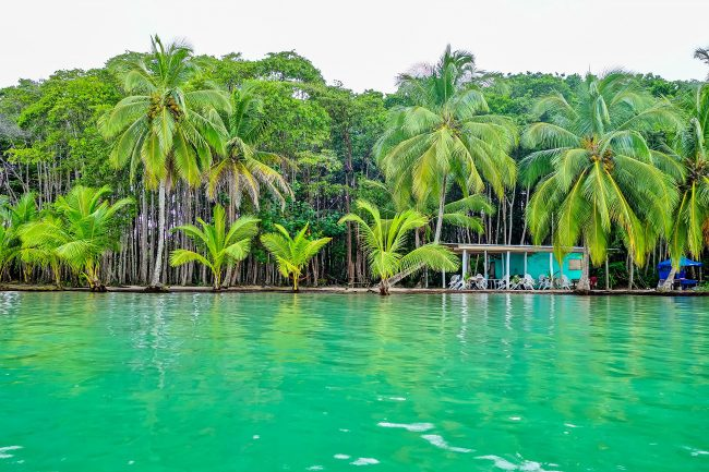 The Tropical Forest of Panama
