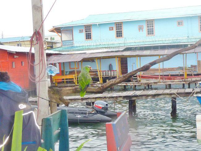 A night out in Bocas del Toro