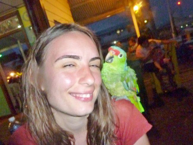 Parrots in Panama